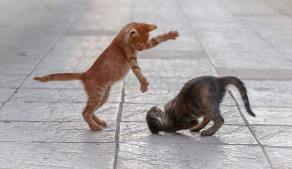 猫がしっぽをふりふりするのは?意味が分かると仲良くなれる?