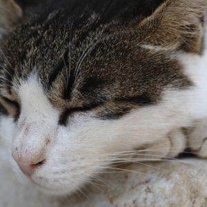 猫がいびきのような呼吸を!もしかしたら病気かも!?
