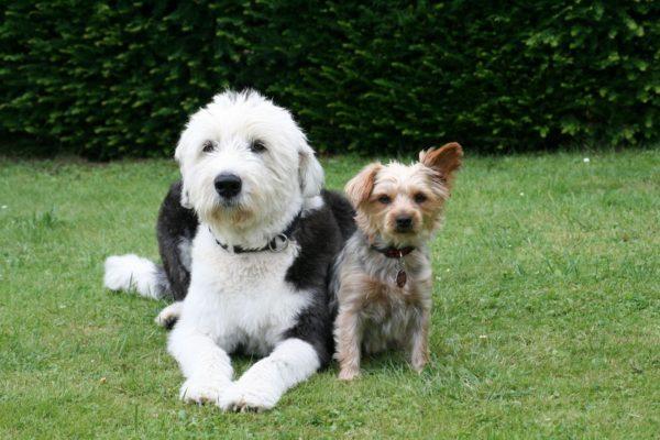 犬が散歩中に座り込む理由や原因は?どう対処するべき?